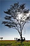 Client and guide having breakfast beneath large acacia tree on grassland, Ol Pejeta Conservancy; Kenya