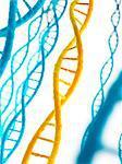 Human deoxyribonucleic acid (DNA), computer illustration.