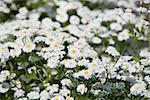 Field of Flowers Full Frame