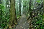 Path through Rainforest, Dorrigo, Dorrigo National Park, New South Wales, Australia
