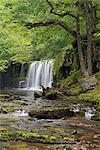 Scwd Ddwli waterfall on the Nedd Fechan River near Ystradfellte, Brecon Beacons, Wales, United Kingdom, Europe