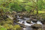 Rocky River Plym flowing through Dewerstone Wood, Dartmoor, Devon, England, United Kingdom, Europe