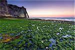 Green Kelp covered Beach in front of Porte d'Aval at Dusk, Cote d'Albatre, Pays de Caux, Seine-Maritime, Haute-Normandie, France