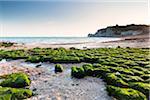 Green Kelp covered Rocky Beach in front of Falaise d'Amont at Sunrise, Cote d'Albatre, Pays de Caux, Seine-Maritime, Haute-Normandie, France