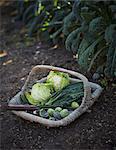 Basket with vegetables in garden