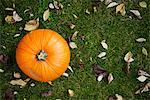 Pumpkin on lawn