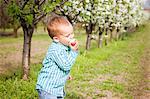 Toddler boy eating an apple, Austria