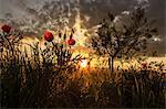 Sunset over rural landscape, Istria, Croatia