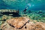 Man with Harpoon underwater, Adriatic Sea, Dalmatia, Croatia