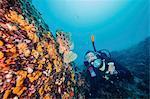Diver exploring coral reef, Adriatic Sea, Dalmatia, Croatia