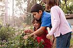 Children observing grasshopper in garden