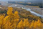 American Aspens (Populus tremuloides) in Autumn Foliage with Creek, Grand Teton National Park, Wyoming, USA