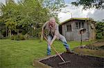 Senior man, raking soil in garden
