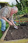 Senior man, planting seedlings in garden