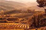 Italy, Italia. Tuscany, Toscana. Firenze district. Chianti. Tavarnelle Val di Pesa. Vineyards near Badia a Passignano
