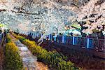 Asia, Republic of Korea, South Korea, Jinhei, spring cherry blossom festival