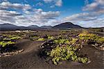 Wine region La Geria, Lanzarote, Canary Islands, Spain