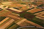 Aerial view of corn fields, Croatia