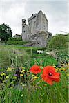 Red poppy in field with Blarney Castle, County Cork, Republic of Ireland