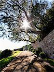 Sun Shining through Branches at Promenade, Cala Ratjada, Majorca, Balearic Islands, Spain