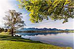 Trees by Lake Shore in Autumn, Lake Hopfensee, Swabia, Bavaria, Germany