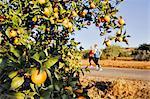 Orange tree, couple jogging on background