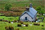 Farmland near Llanuwchllyn, Gwynedd, Wales, United Kingdom