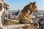 Notre-Dame's gargoyles