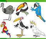 Cartoon Illustration of Funny Exotic Birds Set