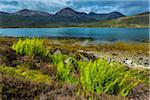 Ferns by Lake near Luib, Isle of Skye, Scotland, United Kingdom