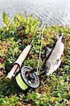 Fish and fishing rod
