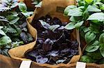 Full frame shot of plants in paper bags