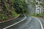 Road at Rain in Rainforest