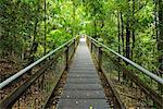Wooden Planks Path through Rainforest