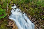 Freshwater brook in spring