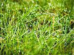 Rain drops on grass