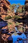 Garden of Eden, Kings Canyon, Watarrka National Park, Northern Territory, Australia