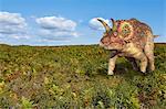 Triceratops dinosaur, computer illustration.