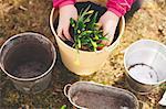 Cropped image of girl planting pot at yard