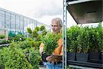 Mature man choosing plants in garden centre, Augsburg, Bavaria, Germany