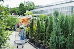 Mature man choosing hedge plant from plant nursery, Augsburg, Bavaria, Germany