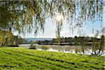 Weeping Willow with Sun and River Main  in the Morning, Stadtprozelten, Churfranken, Spessart, Miltenberg-District, Bavaria, Germany