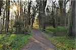 Gravel Path through Park with Sun in Early Spring, Kleinheubach, Churfranken, Spessart, Bavaria, Germany