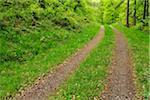 Tire Tracks through Forest in Spring, Miltenberg, Miltenberg District, Churfranken, Franconia, Bavaria, Germany