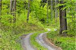 Winding Gravel Road in Forest in Spring, Miltenberg, Miltenberg District, Churfranken, Franconia, Bavaria, Germany
