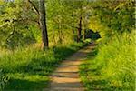Path in Morning in Spring, Niedernberg, Miltenberg District, Churfranken, Franconia, Bavaria, Germany