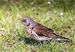 Small bird on the grass