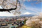 Blooming Cherry Trees above City of Fujiyoshida in front of Mount Fujji, Yamanashi Prefecture, Japan