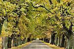 Oak Alley, Ormond Road, Hastings, Hawke's Bay, North Island, New Zealand, Pacific