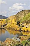 Glendhu Bay, Lake Wanaka, Otago, South Island, New Zealand, Pacific